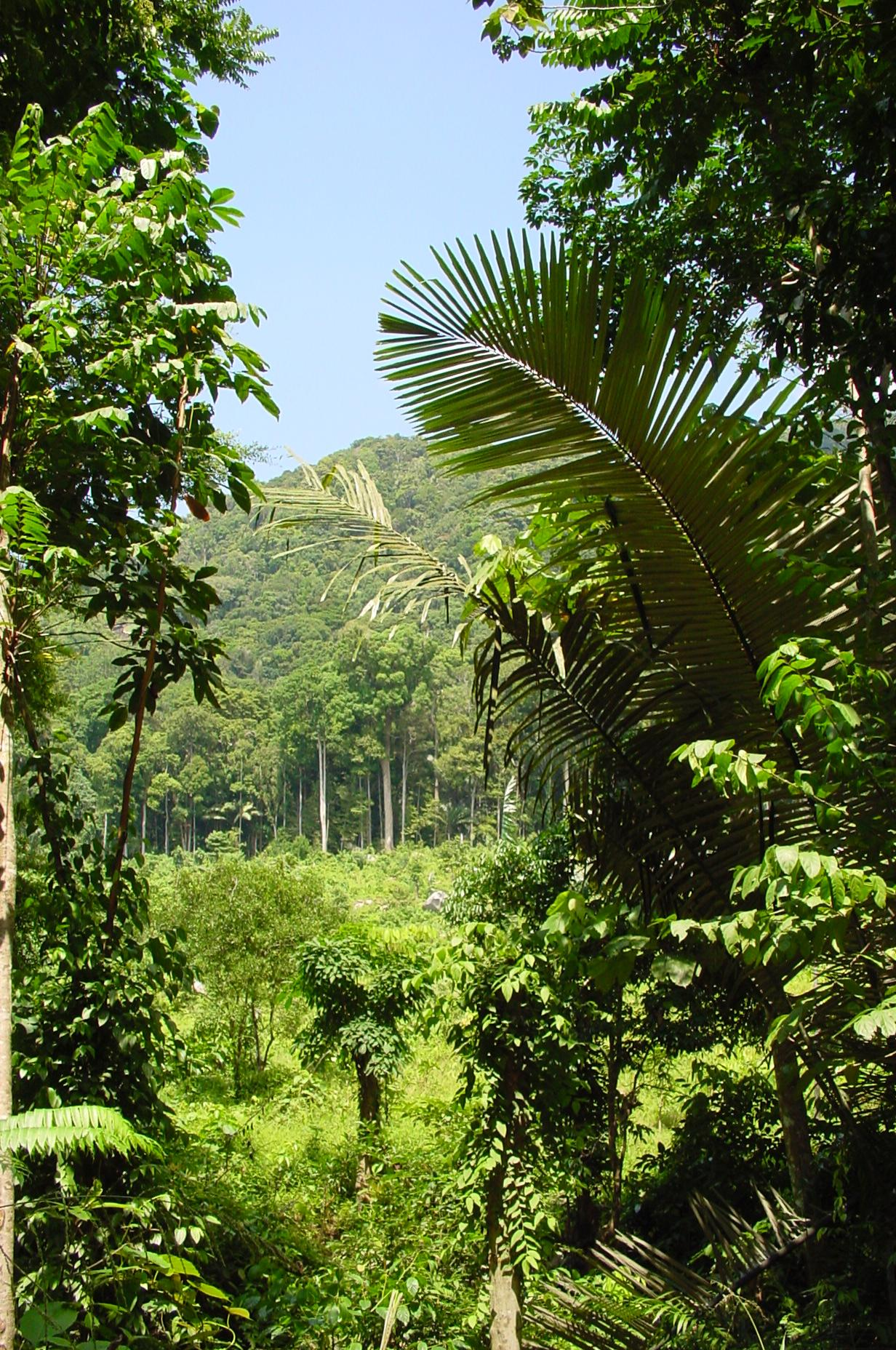 rainforest, tioman.jpg