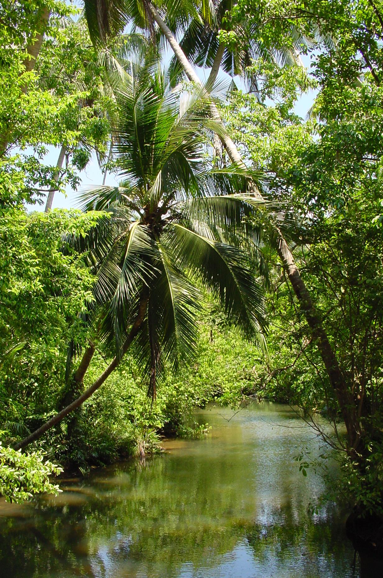 rainforest, tioman1.jpg